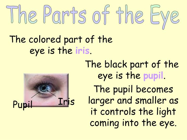 The Parts of the Eye