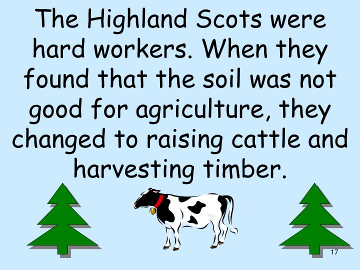 The Highland Scots were hard workers. When they found that the soil was not good for agriculture, they changed to raising cattle and harvesting timber.