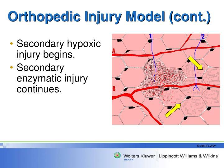 Orthopedic Injury Model (cont.)