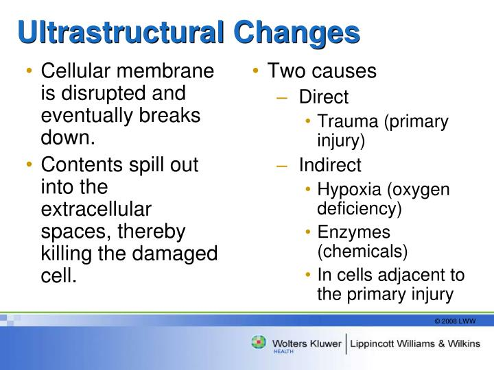 Cellular membrane is disrupted and eventually breaks down.