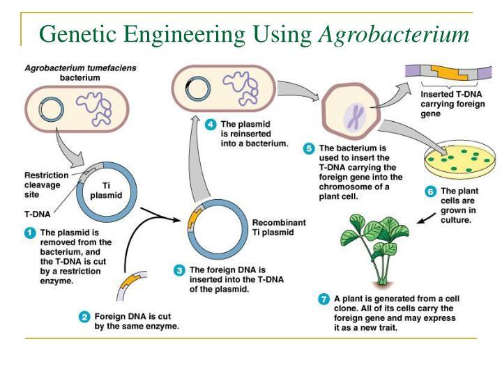 Genetic Engineering Using