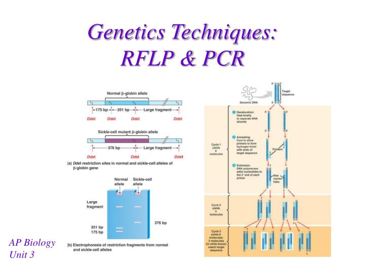 Genetics techniques rflp pcr
