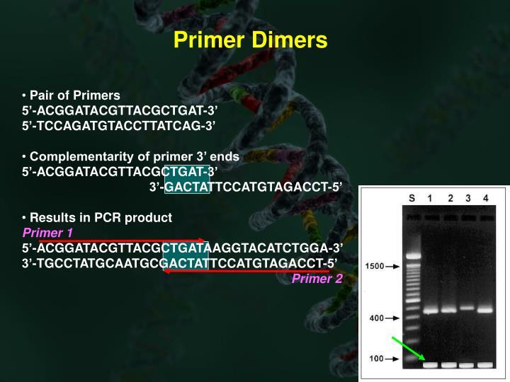 Primer Dimers