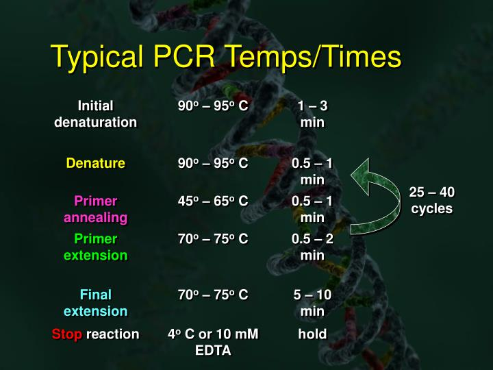 Typical PCR Temps/Times