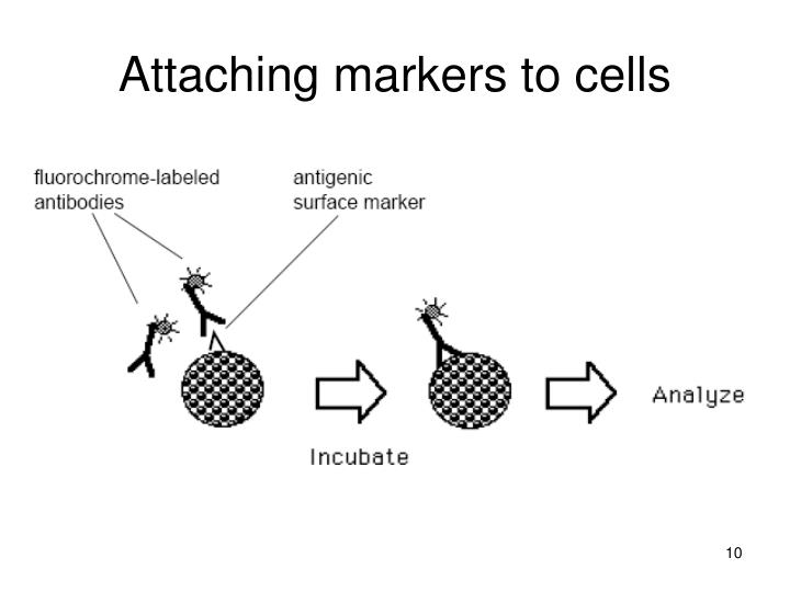 Attaching markers to cells