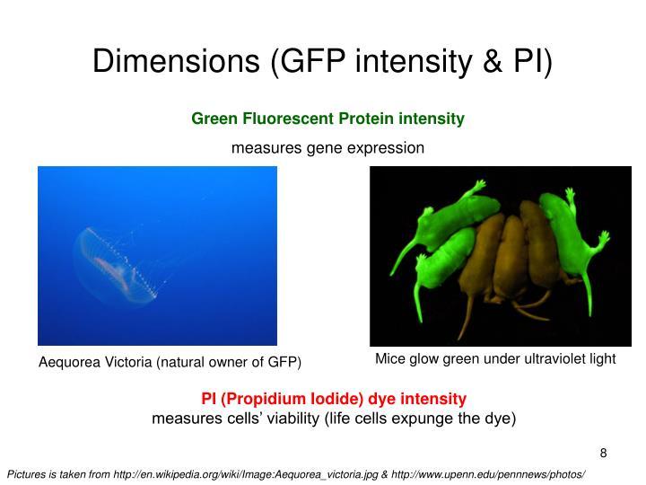 Dimensions (GFP intensity & PI)