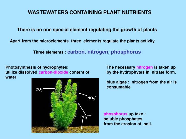 WASTEWATERS CONTAINING PLANT NUTRIENTS