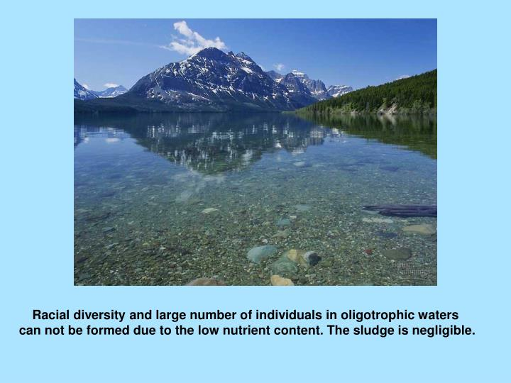Racial diversity and large number of individuals in oligotrophic waters