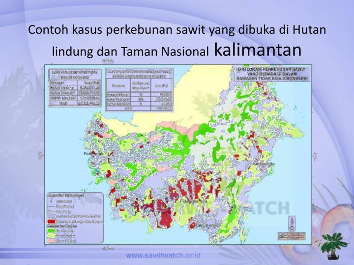 Contoh kasus perkebunan sawit yang dibuka di Hutan lindung dan Taman Nasional