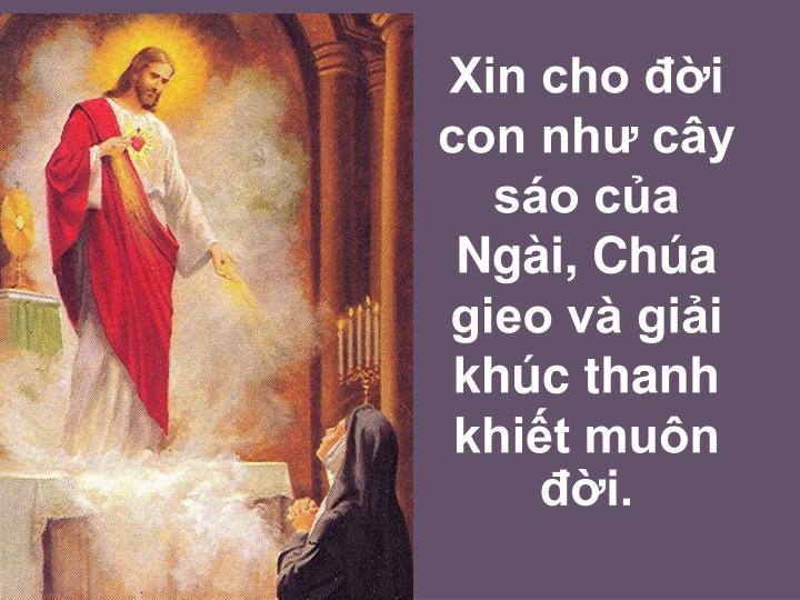 Xin cho đời con như cây sáo của Ngài, Chúa gieo và giải khúc thanh khiết muôn đời.