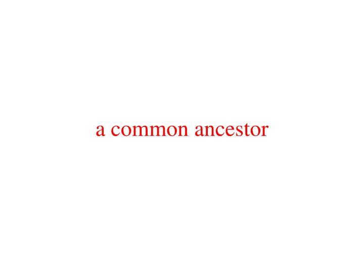 a common ancestor