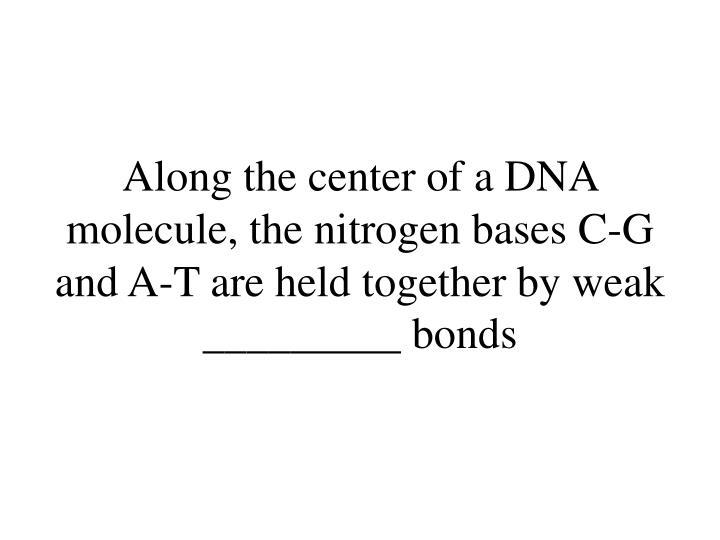 Along the center of a DNA molecule, the