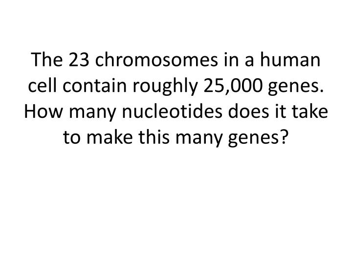 The 23 chromosomes in a human cell contain roughly 25,000 genes.  How many nucleotides does it take to make this many genes?