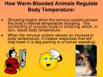 how warm blooded animals regulate body temperature