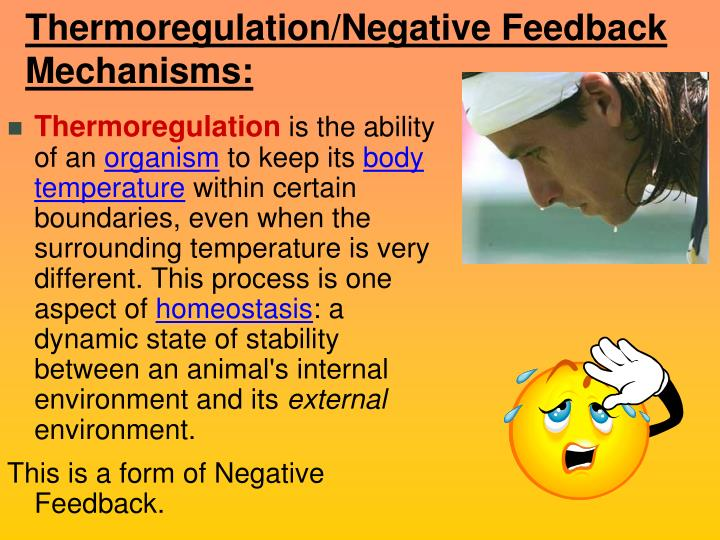 Thermoregulation/Negative Feedback Mechanisms: