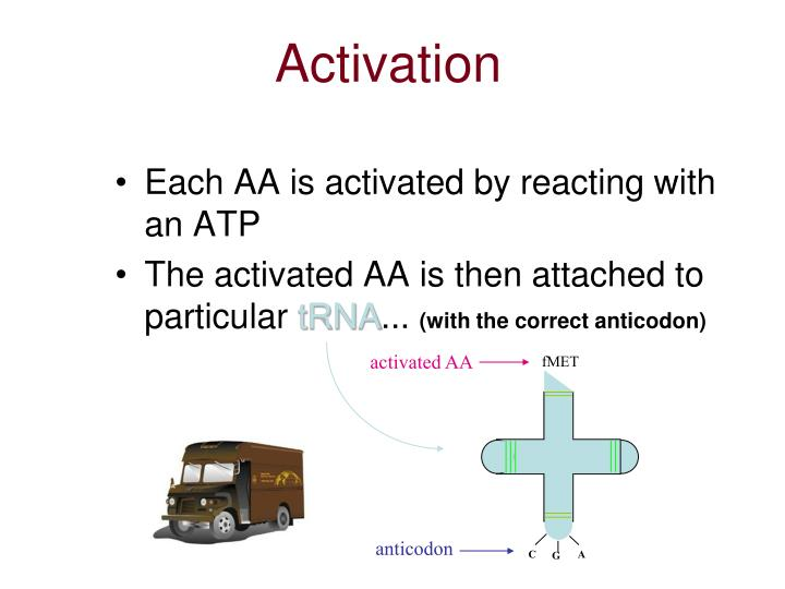 activated AA
