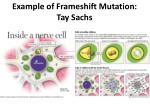 example of frameshift mutation tay sachs