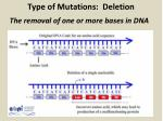 type of mutations deletion