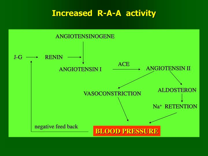 Increased  R-A-A  activity