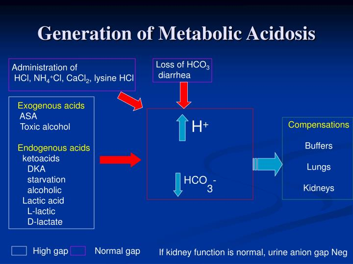 Generation of Metabolic Acidosis