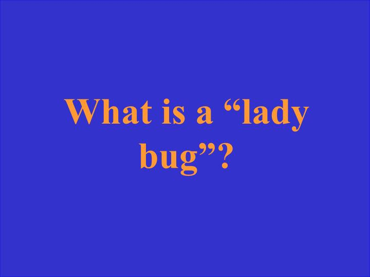 """What is a """"lady bug""""?"""