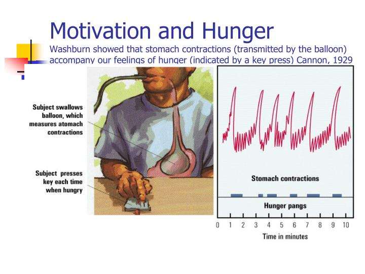 Motivation and Hunger