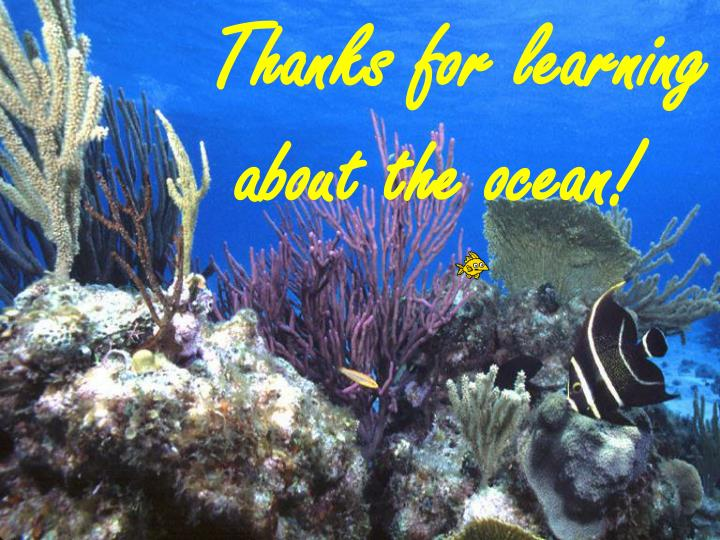 Thanks for learning about the ocean!