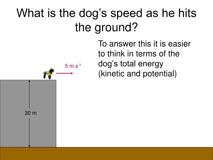 What is the dog's speed as he hits the ground?