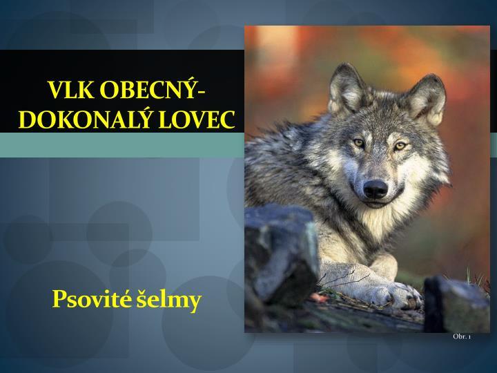 Vlk obecný-