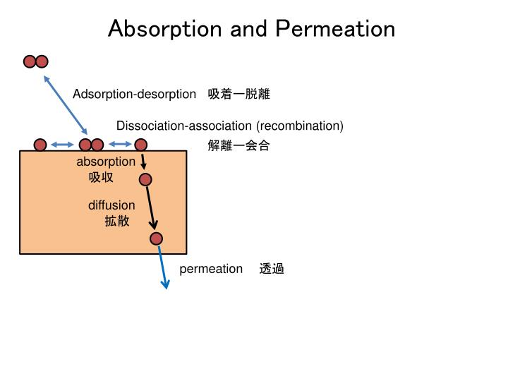 Absorption and Permeation