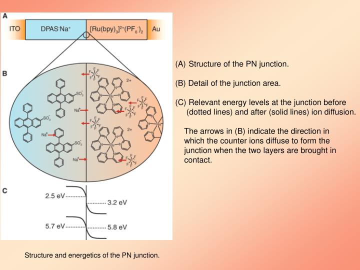 Structure of the PN junction.