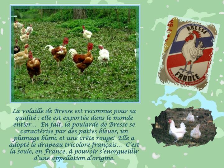 La volaille de Bresse est reconnue pour sa qualité : elle est exportée dans le monde entier…  En fait, la poularde de Bresse se caractérise par des pattes bleues, un plumage blanc et une crête rouge!  Elle a adopté le drapeau tricolore français…  C'est la seule, en France, à pouvoir