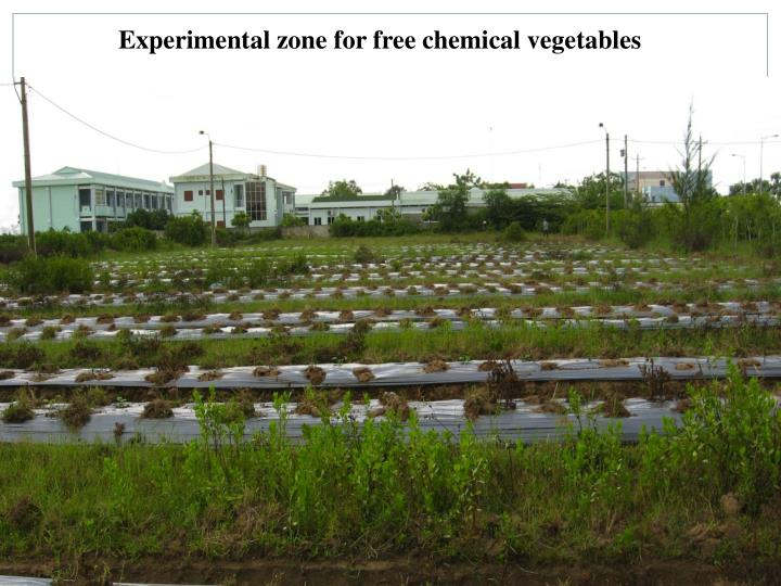 Experimental zone for free chemical vegetables
