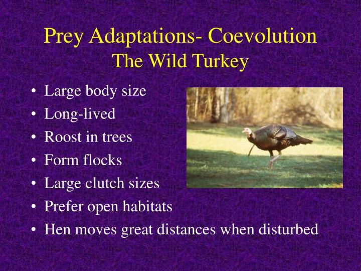 Prey Adaptations- Coevolution