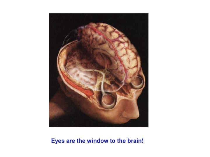 Eyes are the window to the brain!
