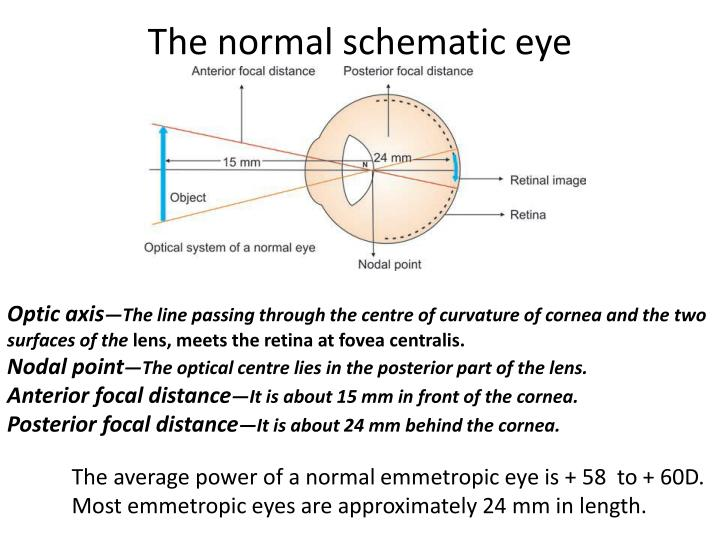 The normal schematic eye