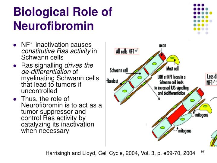 NF1 inactivation causes