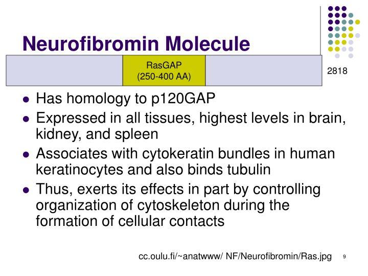 Neurofibromin Molecule