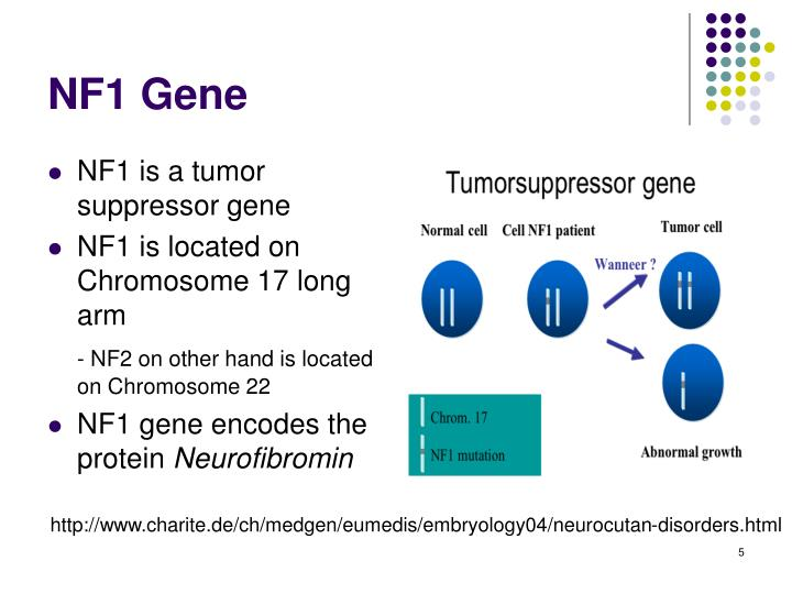 NF1 is a tumor suppressor gene