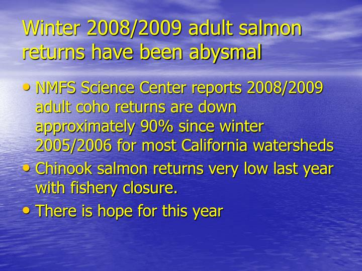 Winter 2008/2009 adult salmon returns have been abysmal