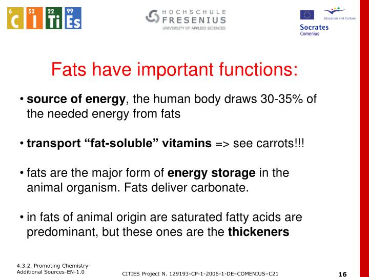 Fats have important functions: