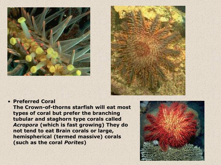 Preferred Coral