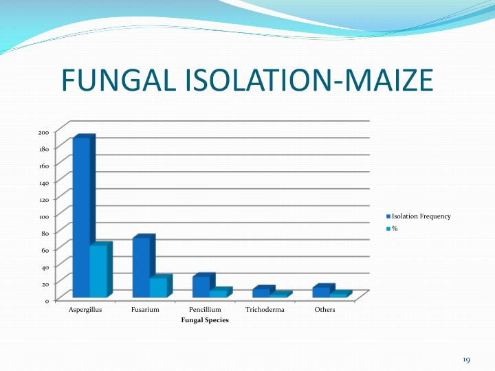 FUNGAL ISOLATION-MAIZE