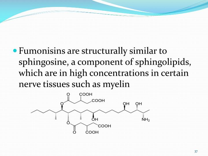 Fumonisins are structurally similar to sphingosine, a component of sphingolipids, which are in high concentrations in certain nerve tissues such as myelin