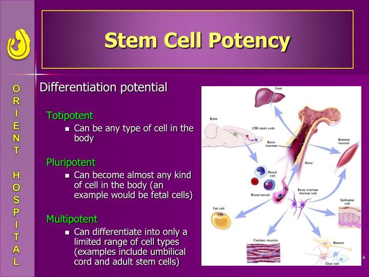 Stem Cell Potency