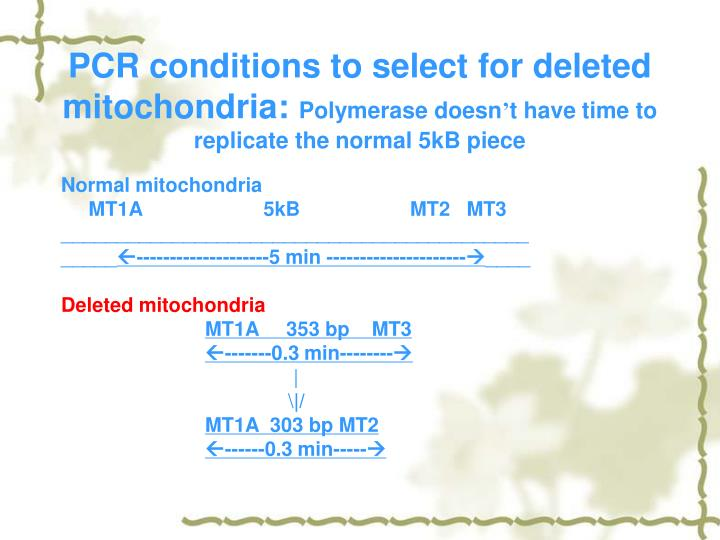 PCR conditions to select for deleted mitochondria: