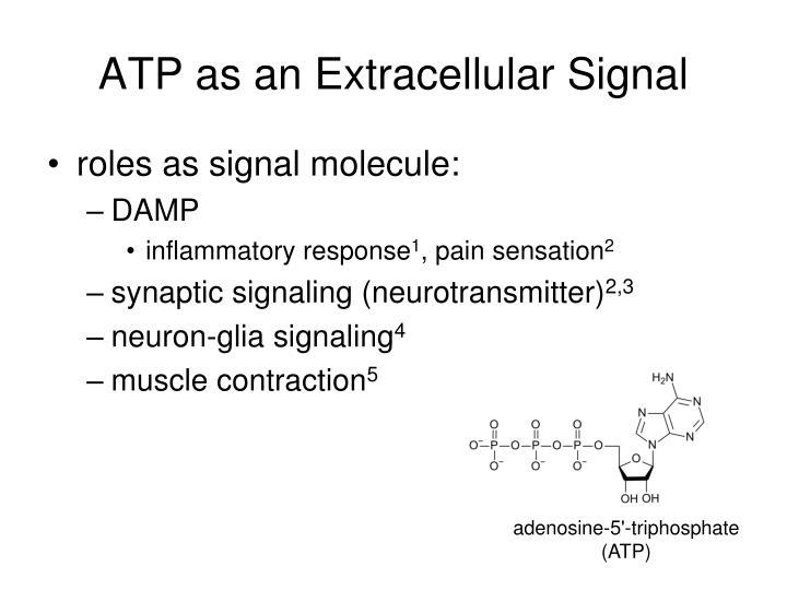 ATP as an Extracellular Signal