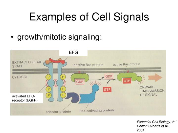 Examples of Cell Signals