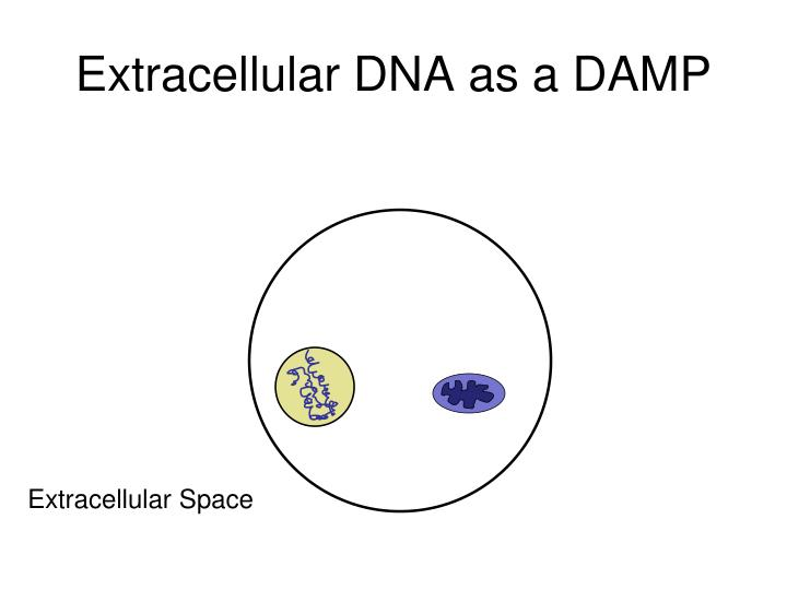Extracellular DNA as a DAMP