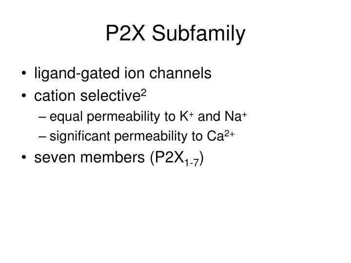 P2X Subfamily